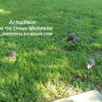 Armadillos – Living the Dream Wednesday