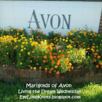 Marigolds of Avon – Living the Dream Wednesday