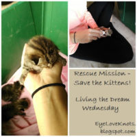 Rescue Mission, Save the Kittens! – Living the Dream Wednesday